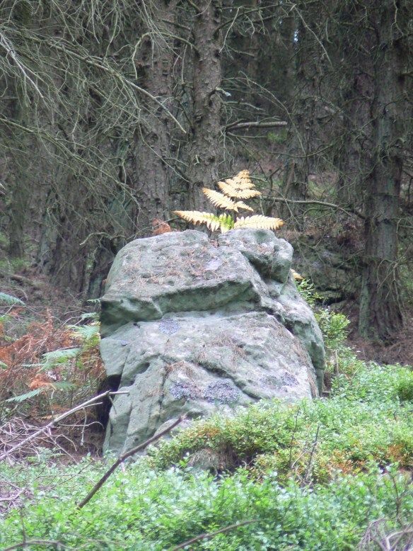 Rock, Thrunton Wood, Northumberland